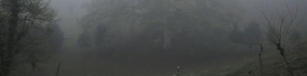 bosquedeniebla1